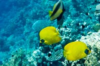 Reef Sharm El Sheikh